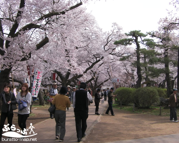 takatojoshi_sakura1142101.jpg